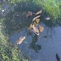 Teichnetz gr n teichnetze feinmaschig und teichnetze for Teichabdeckung gegen fischreiher